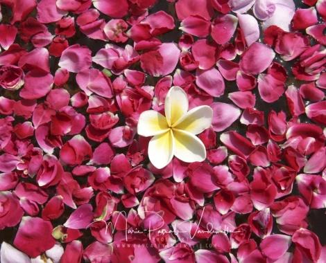 ALONG MY WAY © marie pascale vandewalle rozenblaadjes lowres-min